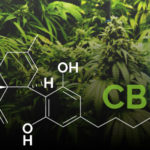 CBD Research/Test Results